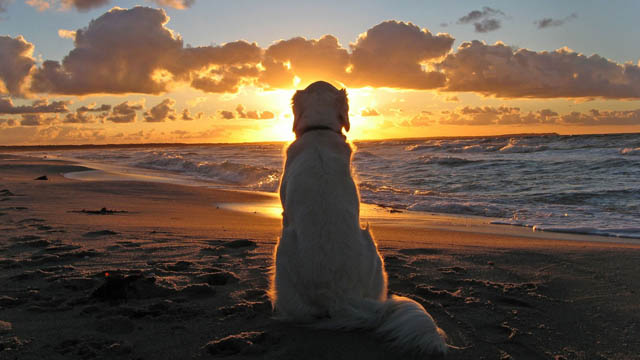 Dog-In-Beach-Watch-Sunset-Wallpaper-HD-Dekstop.jpg