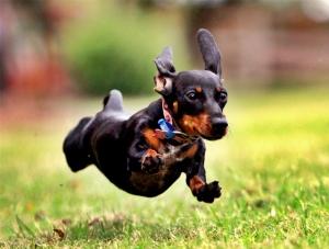 Πως να σταματήσεις ΟΛΕΣ τις ανεπιθύμητες συμπεριφορές του σκύλου σου.